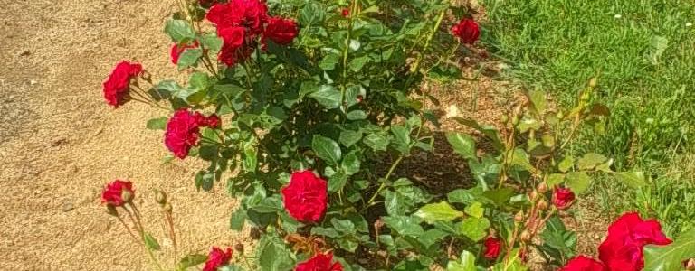 Concours de fleurissement sur la Commune déléguée de Maillet