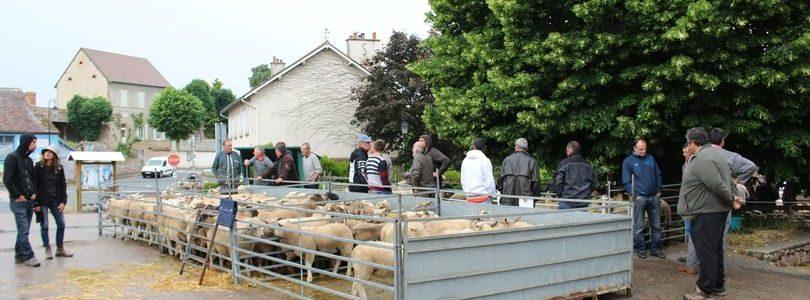 Annulation de la foire aux moutons 2021 à Louroux-Hodement
